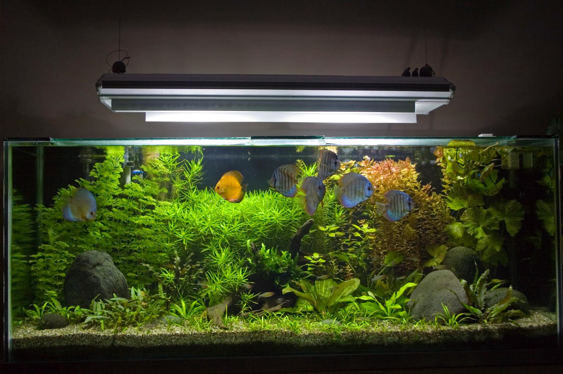 Schule und aquarium