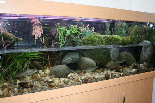 roboter fisch aquarium