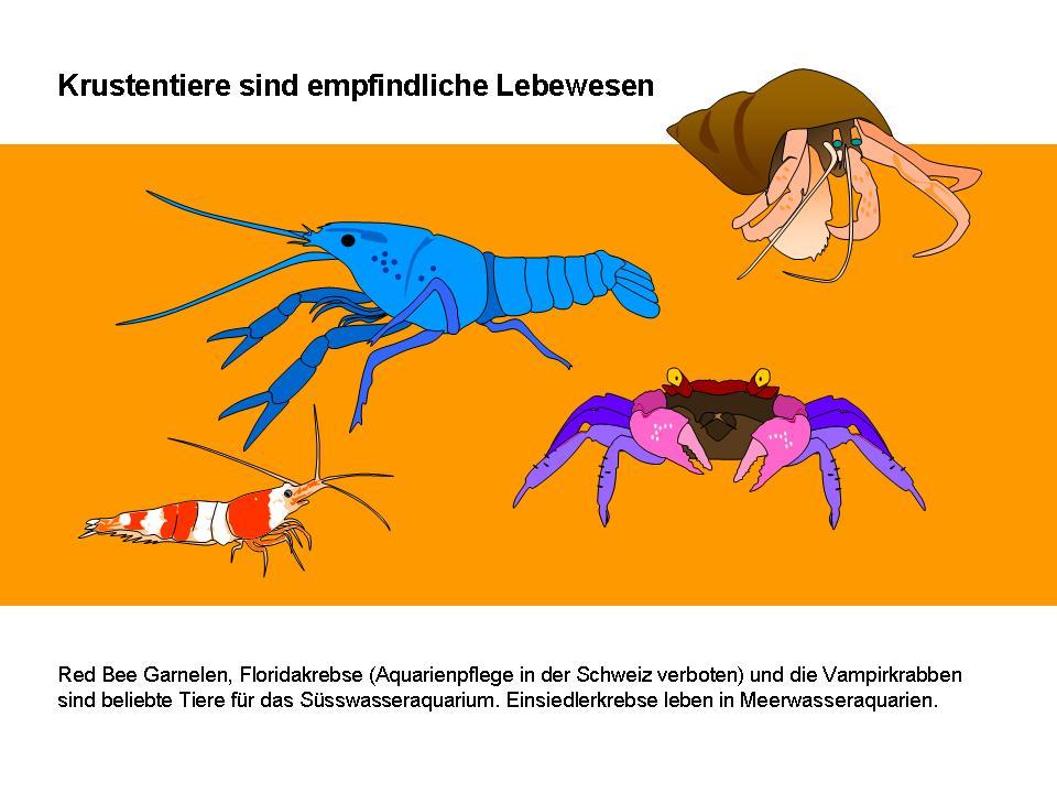 Großartig Mantis Garnelen Anatomie Zeitgenössisch - Anatomie Von ...