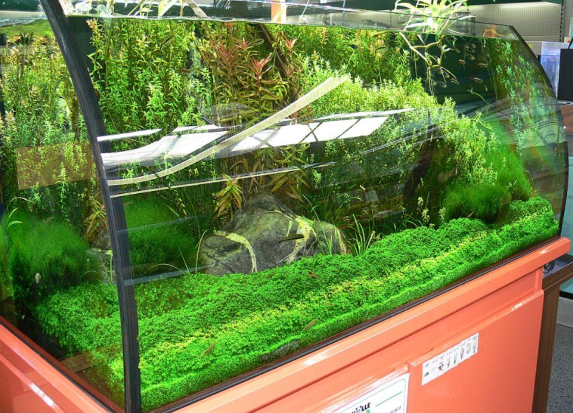 fluss aquarium