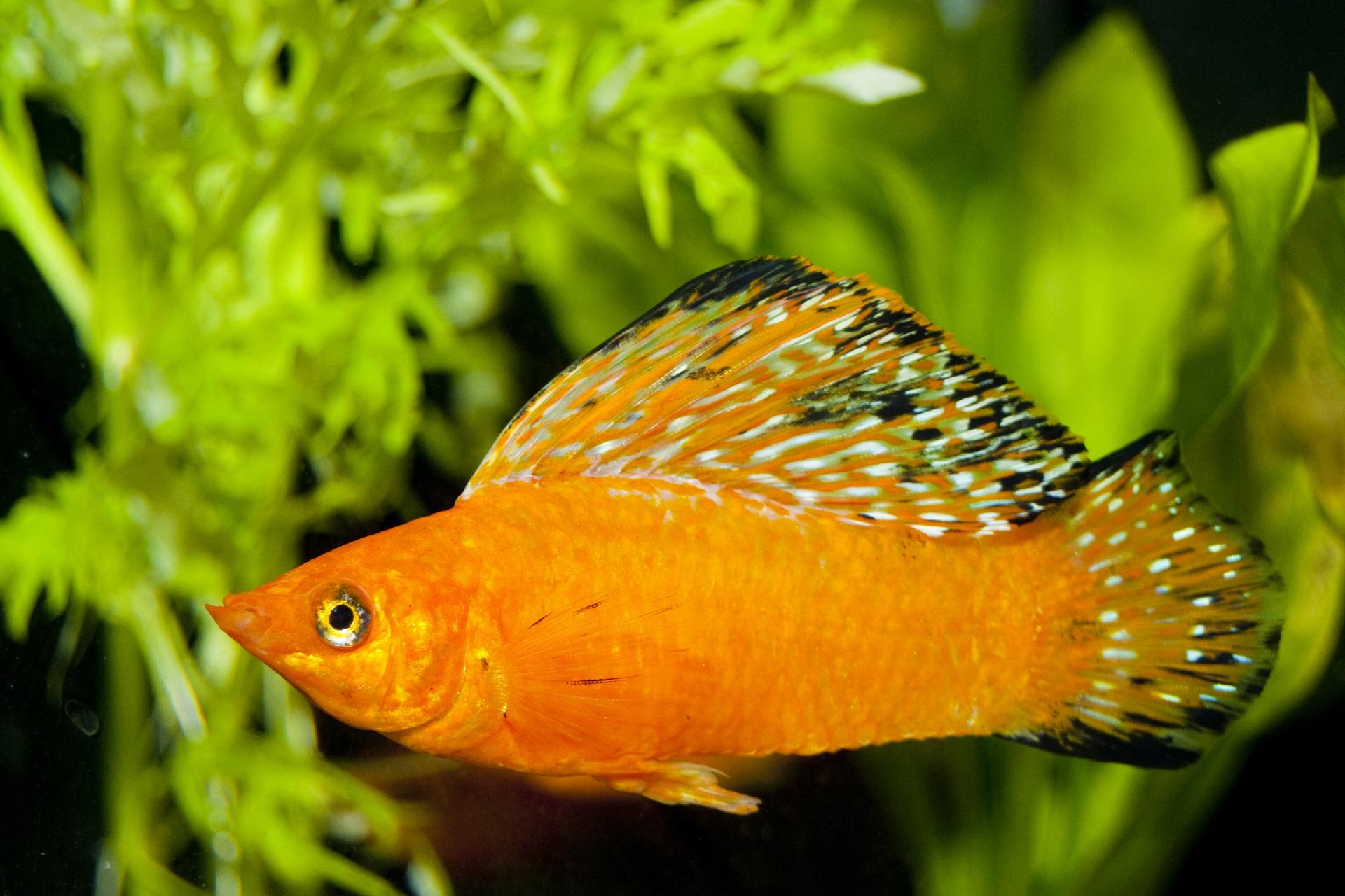 Auswahl und kauf der fische for Fische aquarium